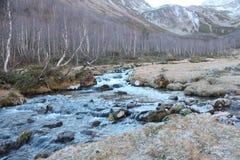 Abbellisca con il fiume e i birchs nelle montagne di Caucaso Fotografia Stock