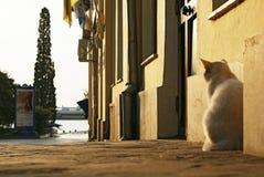 Abbellisca con il gatto al marciapiede vicino alla parete di costruzione fotografia stock