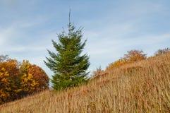 Abbellisca con la foresta di autunno e l'albero di abete nella priorità alta sulla a Immagini Stock