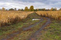 Abbellisca con la strada sporca dopo pioggia fra i giacimenti maturi del mais in Ucraina centrale Immagine Stock Libera da Diritti