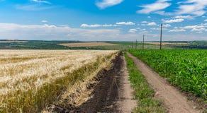 Abbellisca con la strada sporca fra i giacimenti agricoli del mais e del grano Fotografia Stock