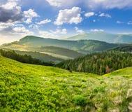 Abbellisca con la valle e la foresta in alte montagne all'alba Immagini Stock
