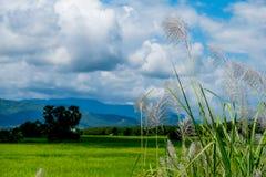 Abbellisca con le belle nuvole ed i Mountain View con il fi verde Fotografia Stock Libera da Diritti