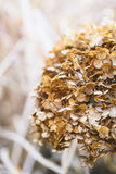 Abbellisca con le foglie di autunno di colore e la luce complete del sole di autunno, con riferimento a Immagini Stock Libere da Diritti