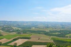 Abbellisca con le vigne da Langhe, l'agricoltura italiana Immagini Stock