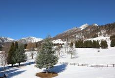Abbellisca con SPITZ nominato alta montagna di TONEZZA in nordico Immagini Stock