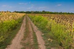 Abbellisca con una strada sterrata fra i campi agricoli con mais ed i girasoli vicino alla città di Dnipro, Ucraina Immagini Stock