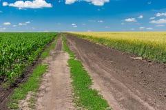 Abbellisca con una strada sterrata fra i giacimenti agricoli del grano e del mais Fotografie Stock