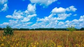 Abbellisca il campo verde sotto un cielo variopinto dell'estate piena di bolle all'alba dell'alba del tramonto Copyspace sul chia Fotografia Stock Libera da Diritti