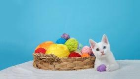Abbellisca il gattino di vista con la palla dei colori differenti osservati dispari del filato Fotografia Stock Libera da Diritti