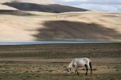 Abbellisca intorno al TSO di Kyagar vicino al TSO Moriri in Ladakh, India Fotografia Stock