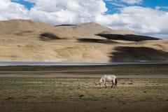 Abbellisca intorno al TSO di Kyagar vicino al TSO Moriri in Ladakh, India Immagine Stock