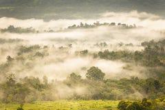 Abbellisca l'alba vaga nebbiosa e fantastica sulle montagne, supporto Immagine Stock Libera da Diritti