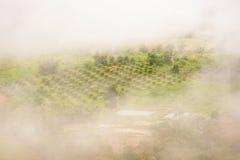 Abbellisca l'alba vaga nebbiosa e fantastica sulle montagne, supporto Fotografia Stock Libera da Diritti