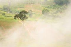 Abbellisca l'alba vaga nebbiosa e fantastica sulle montagne, supporto Immagini Stock