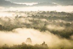 Abbellisca l'alba vaga nebbiosa e fantastica sulle montagne, supporto Fotografie Stock Libere da Diritti