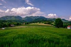 Abbellisca la vista dei campi di un'agricoltura di verde con cielo blu e w Fotografia Stock Libera da Diritti