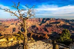 Abbellisca la vista del Grand Canyon con l'albero asciutto in priorità alta Fotografia Stock Libera da Diritti
