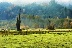 Abbellisca la vista della mattina nebbiosa di ottobre in Shelton Washington immagine stock