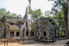 Abbellisca la vista delle tempie a Angkor Wat, Siem Reap, Cambogia fotografia stock libera da diritti