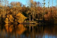 abbellisca nei colori di autunno con gli alberi sul lago o sul fiume Fotografia Stock Libera da Diritti