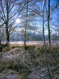Abbellisca nel giorno nuvoloso dell'inverno dei campi e delle foreste innevati Immagini Stock