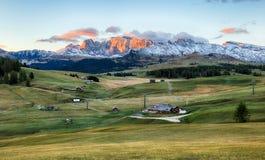 Abbellisca nel pascolo della montagna ed alzi, Alpe di Siusi, dolomia Fotografie Stock Libere da Diritti
