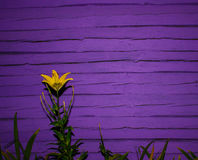 Abbellisca per i precedenti vicino alla parete di legno con un giglio Fondo fotografia stock libera da diritti