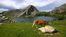 Abbellisca in Picos de Europa, Asturie, Spagna immagine stock