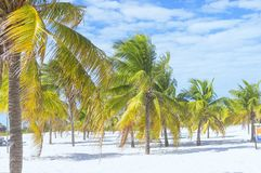 Abbellisca su una spiaggia esotica con le palme Fotografia Stock Libera da Diritti