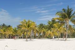 Abbellisca su una spiaggia esotica con le palme Immagini Stock