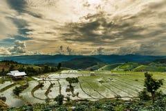 Abbellisca, terrazzi del riso di PA Pong Piang della Tailandia Immagini Stock Libere da Diritti