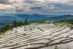 Abbellisca, terrazzi del riso di PA Pong Piang della Tailandia Fotografie Stock