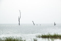 Abbellisca in Toko vicino al lago Volta nella regione del Volta nel Ghana Fotografia Stock