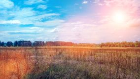 Abbellisca un campo verde nell'ambito di un'alba variopinta dell'alba del tramonto del cielo dell'estate piena di bolle Copyspace Immagini Stock