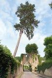 abbey cernay de vaux Arkivbilder