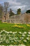 abbey dryburgh Royaltyfri Fotografi