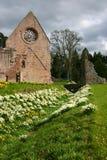 abbey dryburgh Arkivfoton