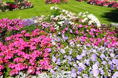 Abbey Gardens flowerbeds, Evesham. Royalty Free Stock Photos