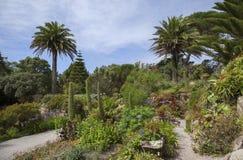 Abbey Gardens Tresco, öar av Scilly, England Arkivfoton