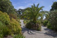 Abbey Gardens, Tresco, islas de Scilly, Inglaterra Imágenes de archivo libres de regalías