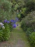 Abbey Gardens, Tresco, islas de Scilly, Inglaterra Imagenes de archivo