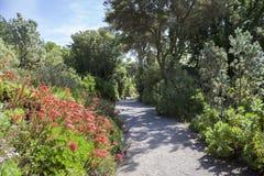 Abbey Gardens, Tresco, islas de Scilly, Inglaterra Imagen de archivo libre de regalías