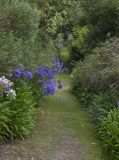Abbey Gardens, Tresco, Isles of Scilly, England Stock Images