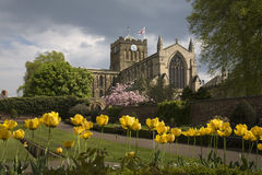 abbey hexham Royaltyfria Bilder