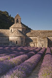 Abbey lavende. Lavender in front of the abbaye de Senanque in Provence Royalty Free Stock Photos