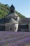 Abbey and Monastery of Senanque with Rows of Lavender, Provence Royalty Free Stock Images