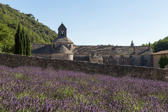 Abbey and Monastery of Senanque with Rows of Lavender, Vaucluse Royalty Free Stock Photo