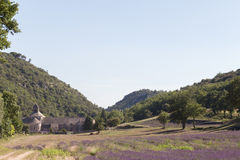 Abbey and Monastery of Senanque with Rows of Lavender, Vaucluse Stock Photos