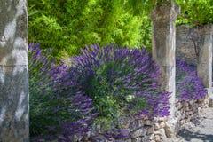 Abbey Provence France Royalty Free Stock Photos